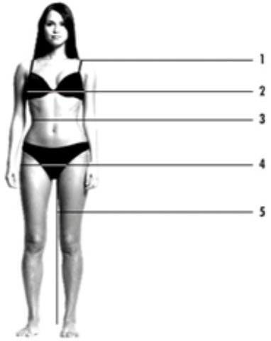 measurement image of a woman
